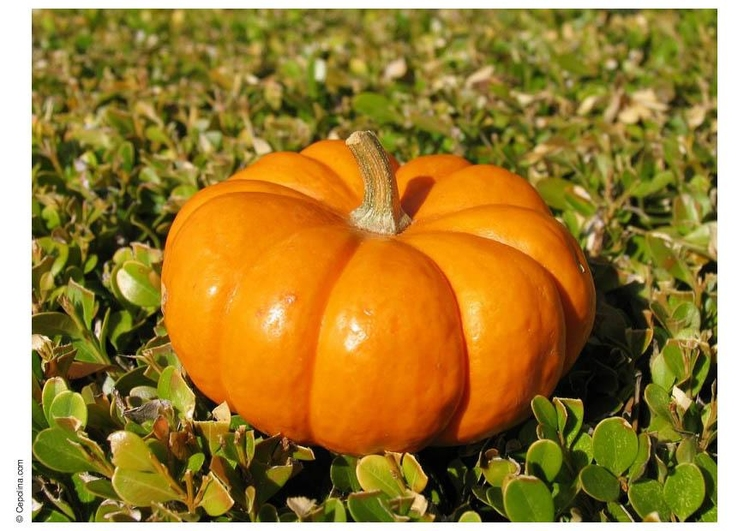 Photo pumpkin