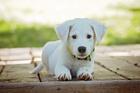 Photo puppy