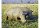 Photo rhino