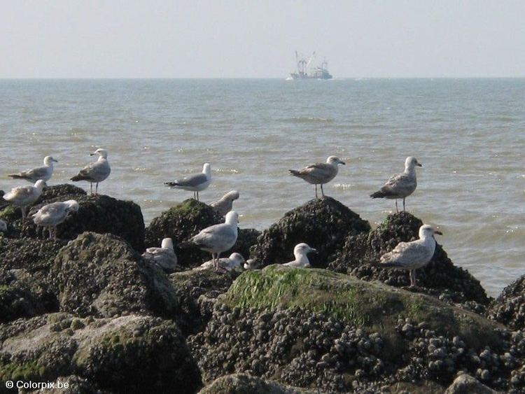 Photo sea gulls 3