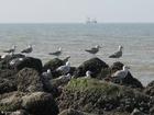 Photo sea gulls 3