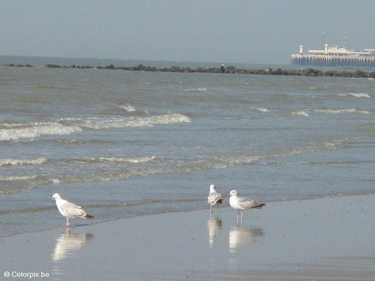 Photo sea gulls 4