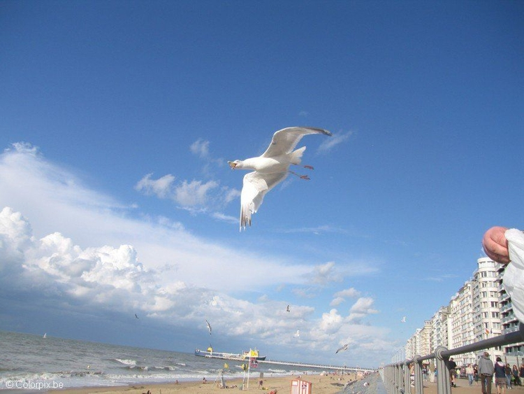 Photo sea gulls at the beach 2