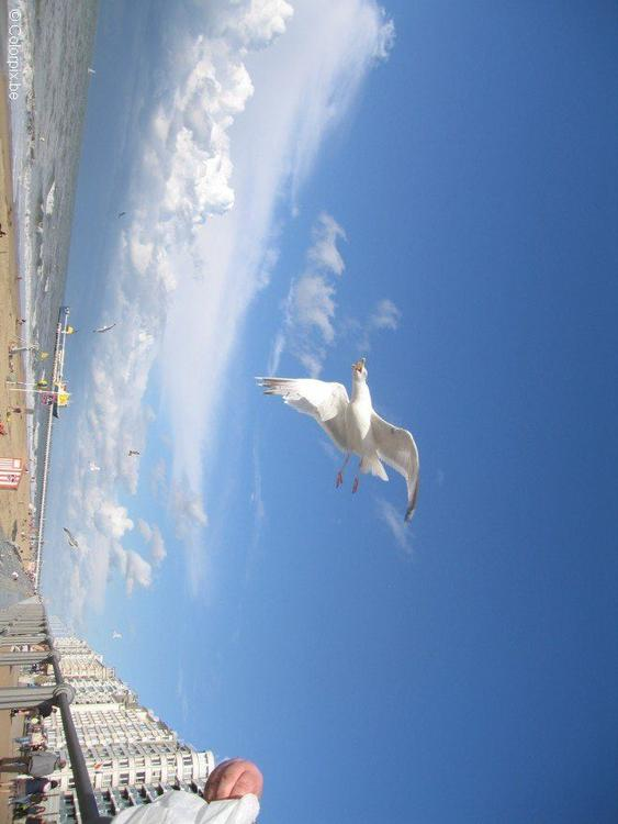 sea gulls at the beach 2