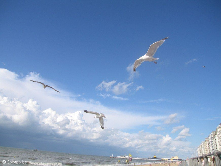 Photo sea gulls at the beach 3