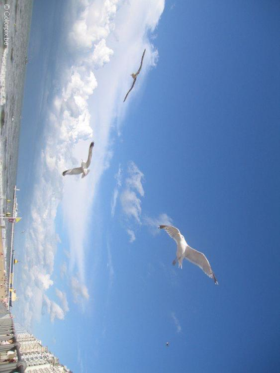 sea gulls at the beach 3