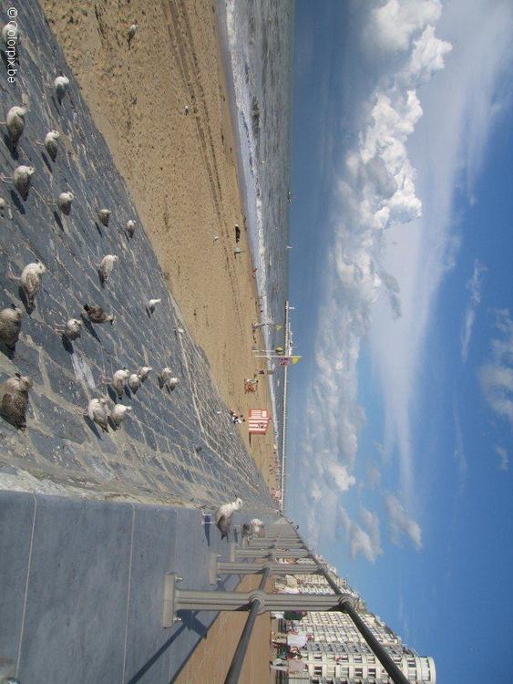 sea gulls at the beach 4