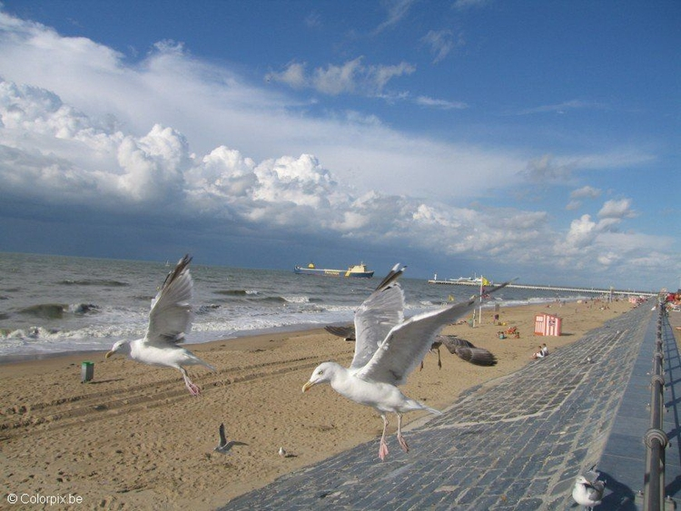 Photo sea gulls at the beach