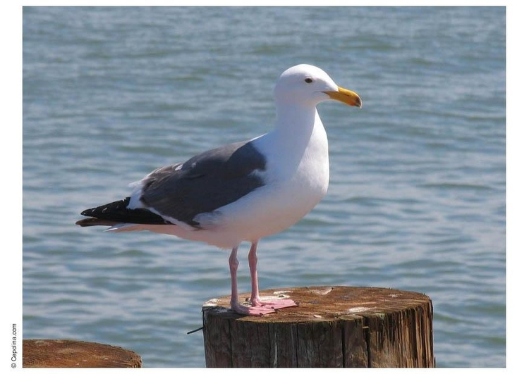Photo seagull