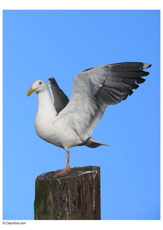 Photo seagull on pole