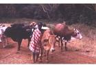 Photo shepherd in Kenya