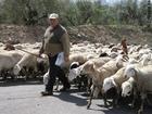 Photo shepherd