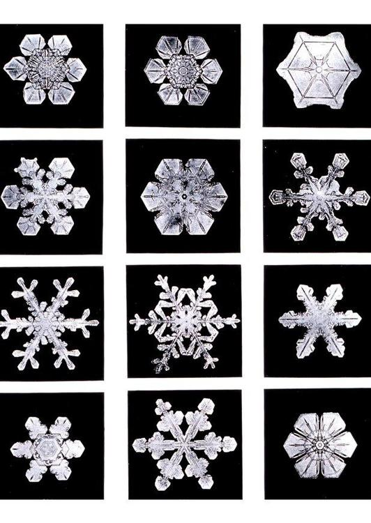 snowflake - ice crystal