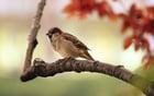 Photo sparrow