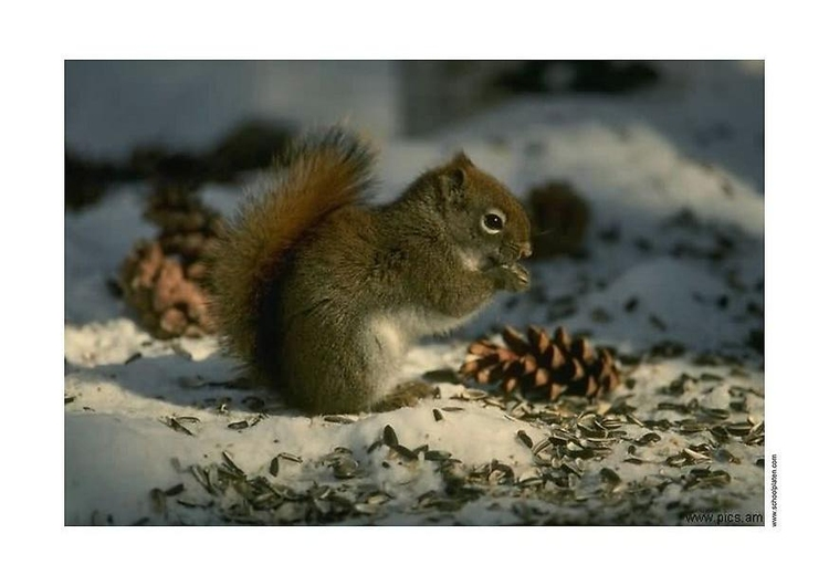 Photo squirrel