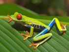 Photo tree frog