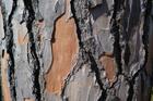 Photo tree trunk