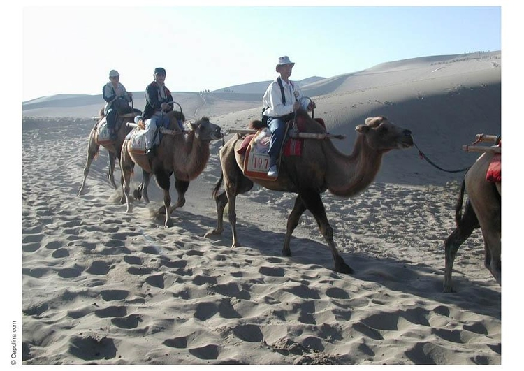 Photo trekking through desert on camels