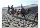 Photo trekking through desert on camels
