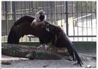 Photo vulture