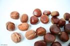 Photo walnuts and chesnuts