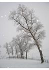 Photo winter scene