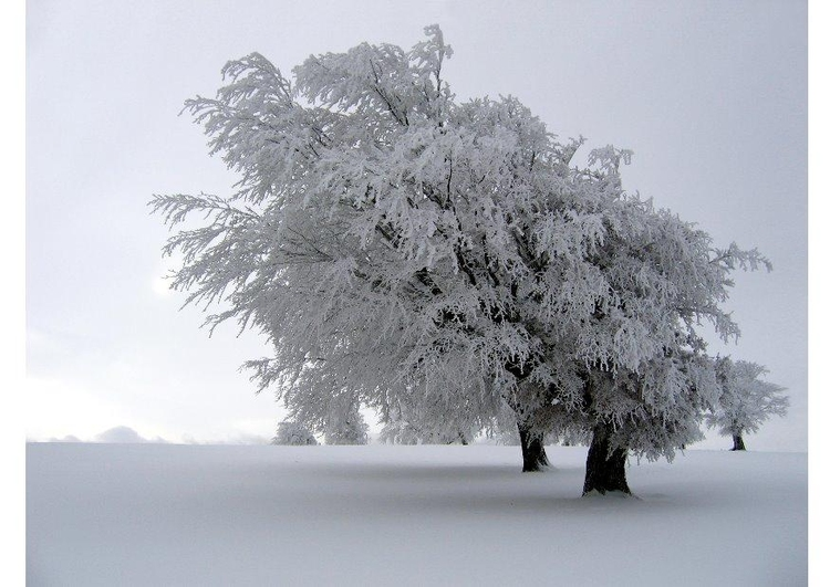 Photo tree in the winter