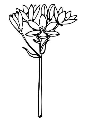 Coloring page star of Bethlehem