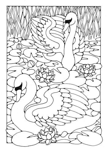 Раскраски страницу лебедей